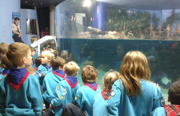 Beavers at The Deep in Hull
